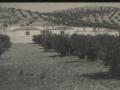 foto-antigua-cementerio-municipal-1958